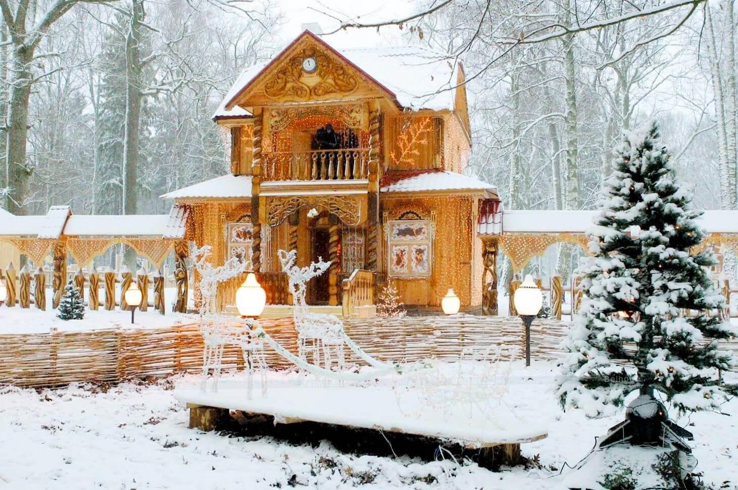 сети беловежская пуща фотографии зимой толпятся, словно